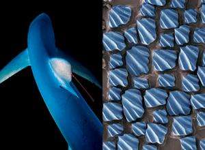 Biomimétisme et innovations en santé : les solutions sont dans la nature