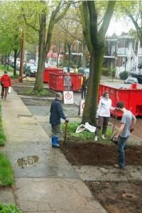 Une rue de Montréal en train d'être verdit par l'organisme Jardin de rue
