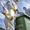 Animal and human health intertwined