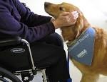 Thérapie assistée par l'animal : quand les animaux nous font du bien
