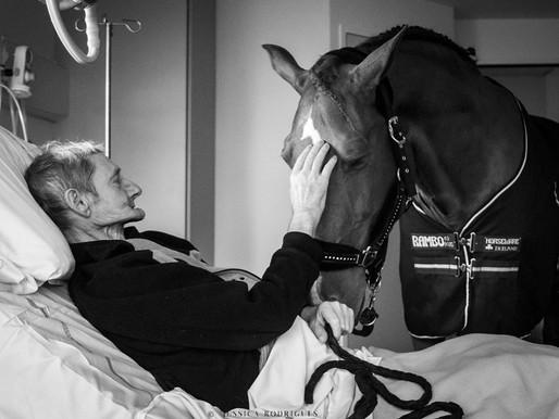 Peyo, le cheval qui rend visite à l'hôpital
