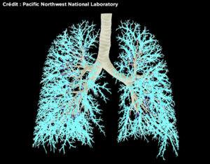 Journée mondiale de l'asthme : 670 millions de poumons malades