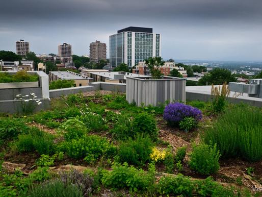 Urbanisation et santé publique : reconnecter avec la nature en ville