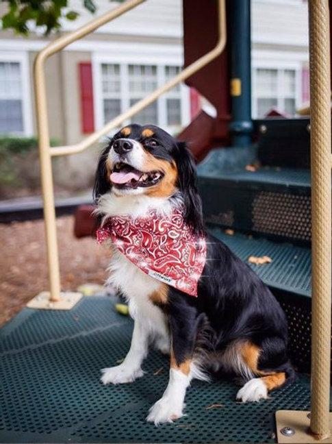 Tie-Style LED Dog Bandana