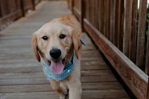 LED Dog Bandana: Chambray