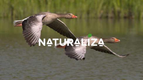NATURALIZA