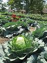 Stone Soup Farm