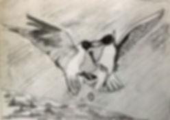 fighting seagulls.jpg