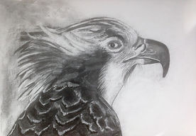 osprey charcoal drawing.jpg