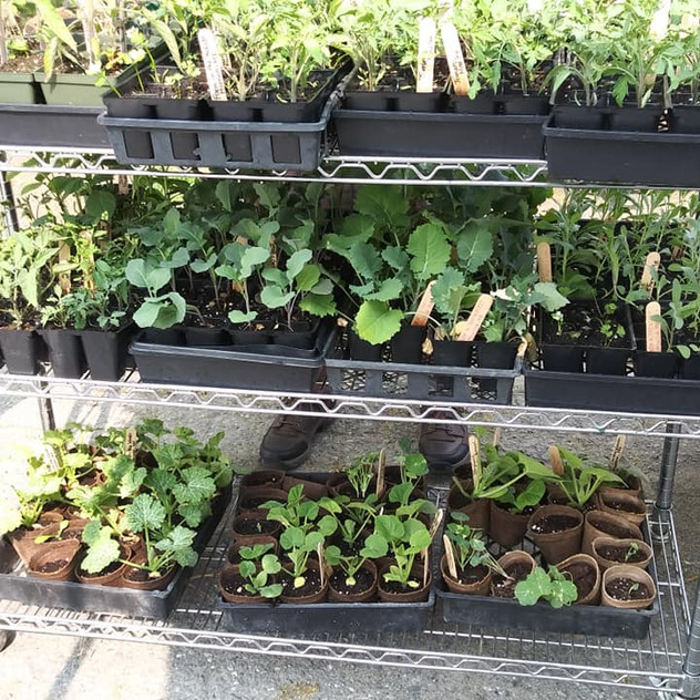 Seedlings at Dovers Cove