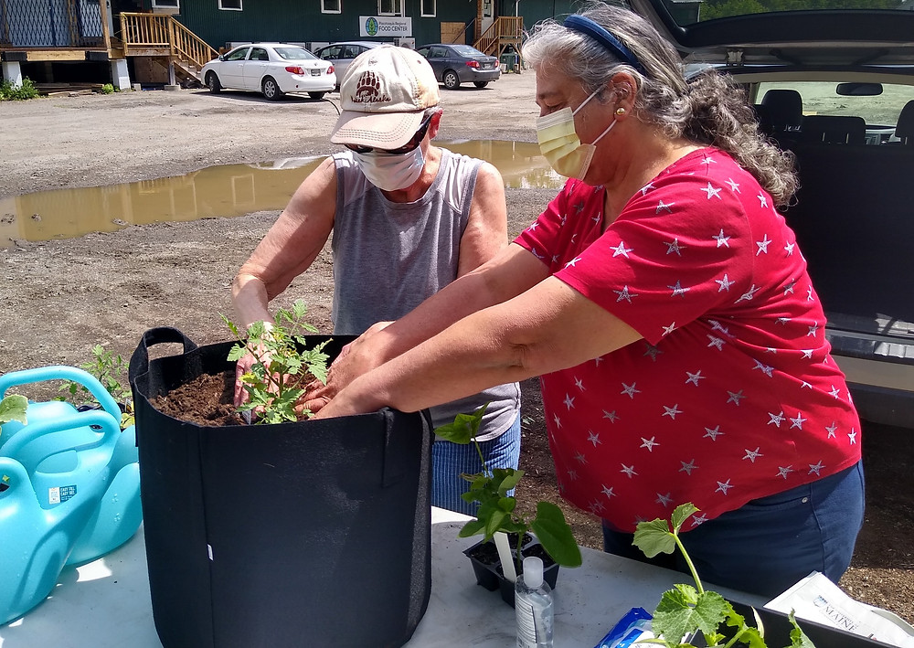 Two women mid-planting on a sunny day placing plants into large black cloth containers. Blue watering can, other seedlings and trowels are strewn about the workspace.