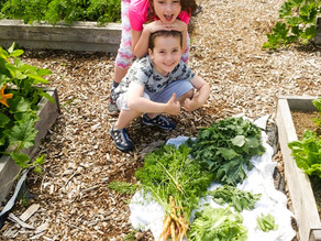Summer Garlic Harvest in the SeDo School Garden