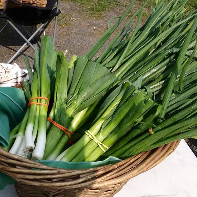Onion Garlic and Leeks
