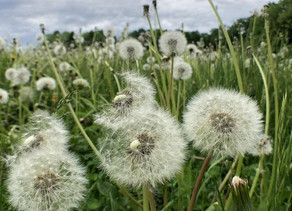 Jackson Regenerational Farm: Growth is uncomfortable and How we wrangle an errant sheep