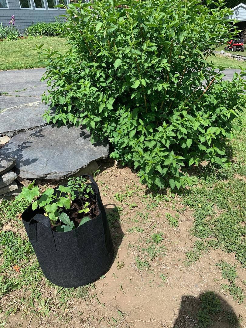 gbox_gardenerhome1.jpg