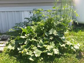 Photos of Bounty from Gardener Lisa