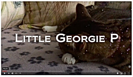 Little Georgie P....jpg