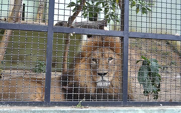 Zoológico Municipal de Varginha