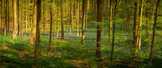 EGRA_2012-05-01_Belgium_024_Hallerbos.jp