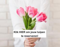 Klik op de afbeelding om jouw tulpen te reserveren!