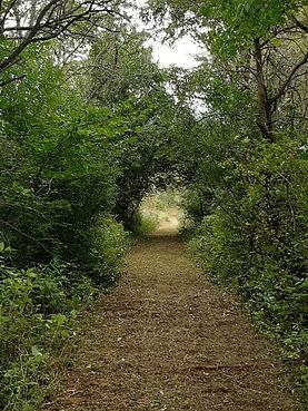 Rabbit Hole Sept 2020 Trail - 00002.jpg