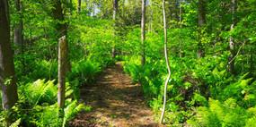 Green Fern Trail