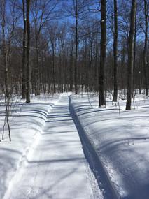 Winter Walking Trail