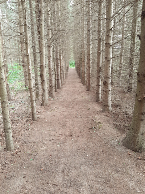 Tree lined trail in mono