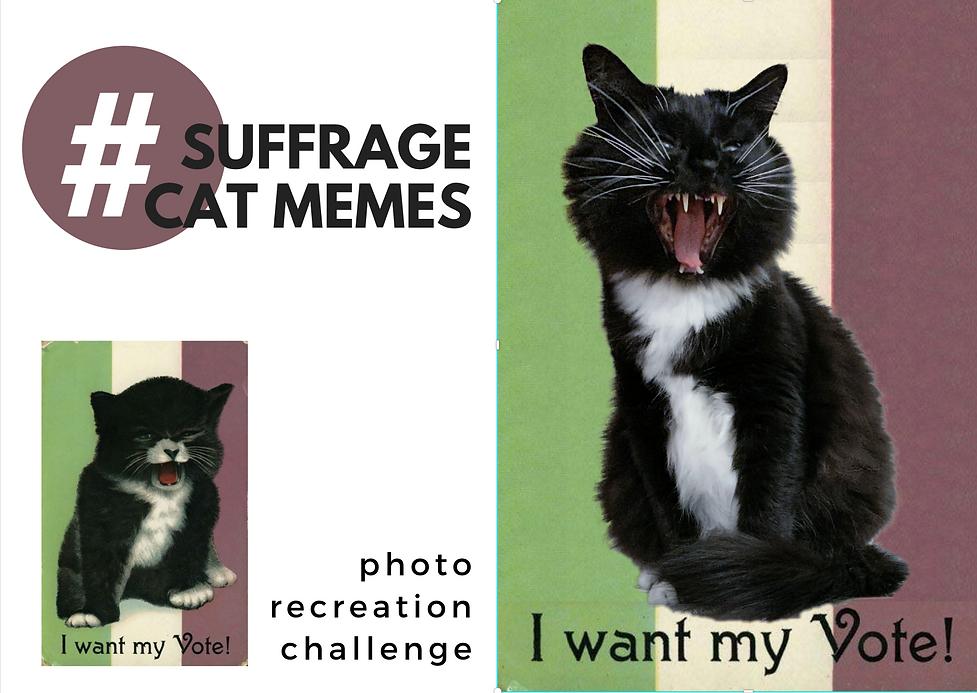 suffrage cat meme.png