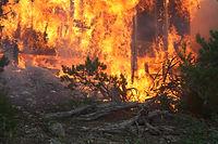 Wildfire, Emergency, Preparedness, Emergency Preparedness, Gilpin, County, Sheriff, Management
