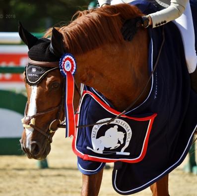 leśna koń.jpg