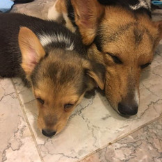 Precious little Rickon and Mama snoozing