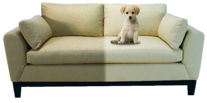 Sofá com Dog.png