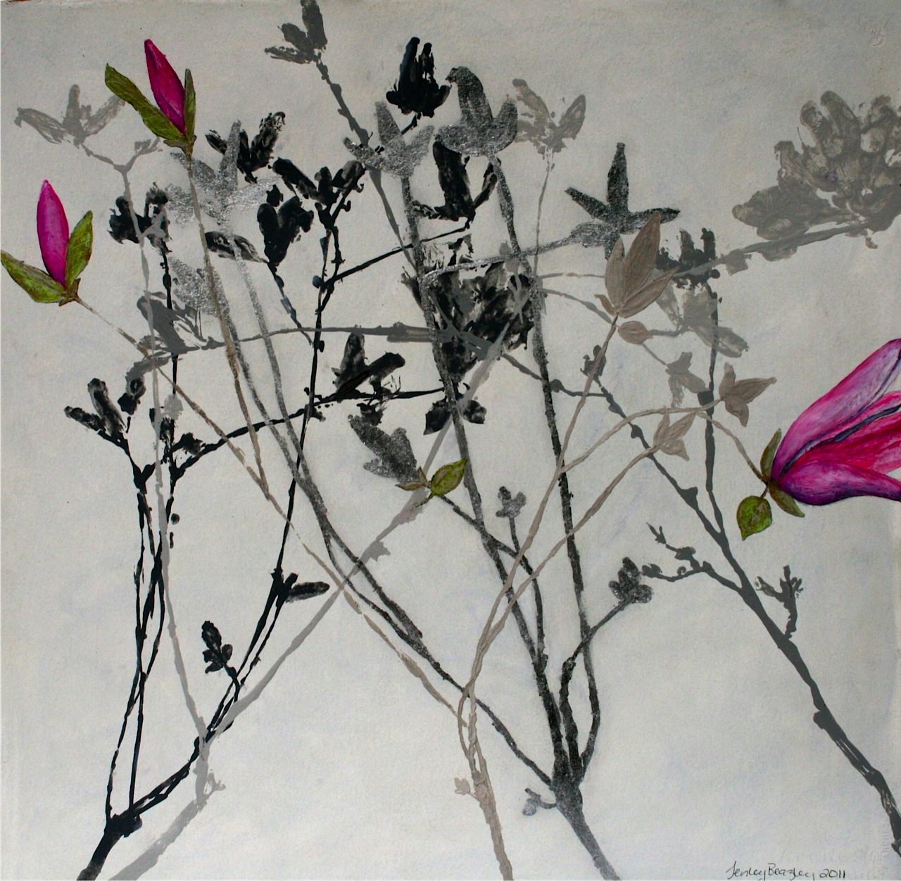 Willow VI - Tulip Magnolia (2011)