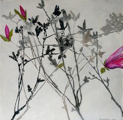 Willow VI - Tulip Magnolia (2011)