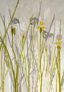 Irises - White (2012)