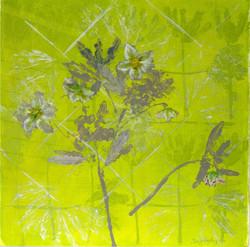 Lenten Rose (2010)