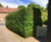 Native hedging.jpg