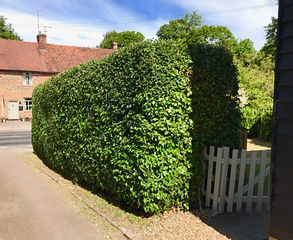 Native hedging.jpg