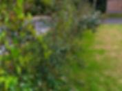 Original hedging.jpg