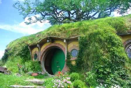 The hobbiton at Matamata