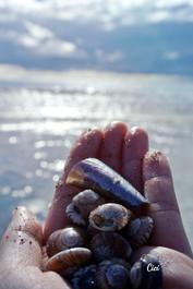 Shells from Waiheke Island