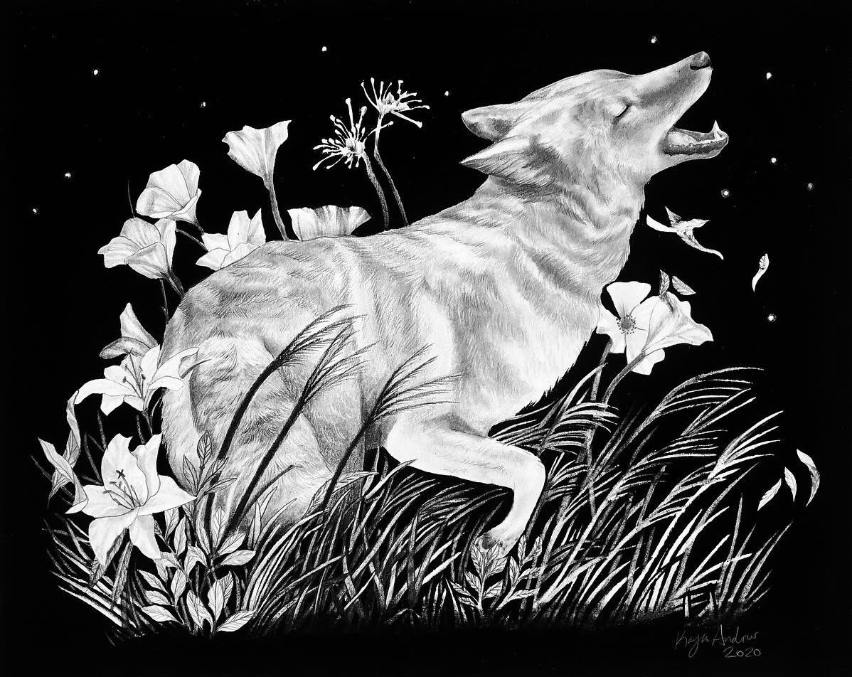 Coyote 2020
