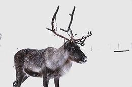 Laponia 2020-8.jpg