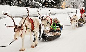 Reindeer-Caravan.jpg