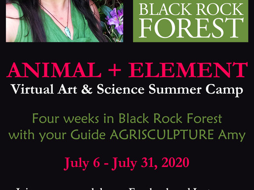 ANIMAL + ELEMENT : VIRTUAL ART & SCIENCE SUMMER CAMP AT BLACK ROCK FOREST BY AGRISCULPTURE