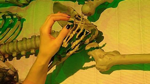 Esqueleto do Cavalo