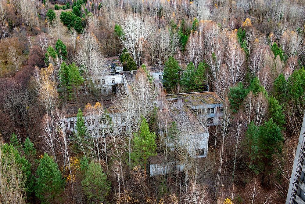 Pripyat - Forest