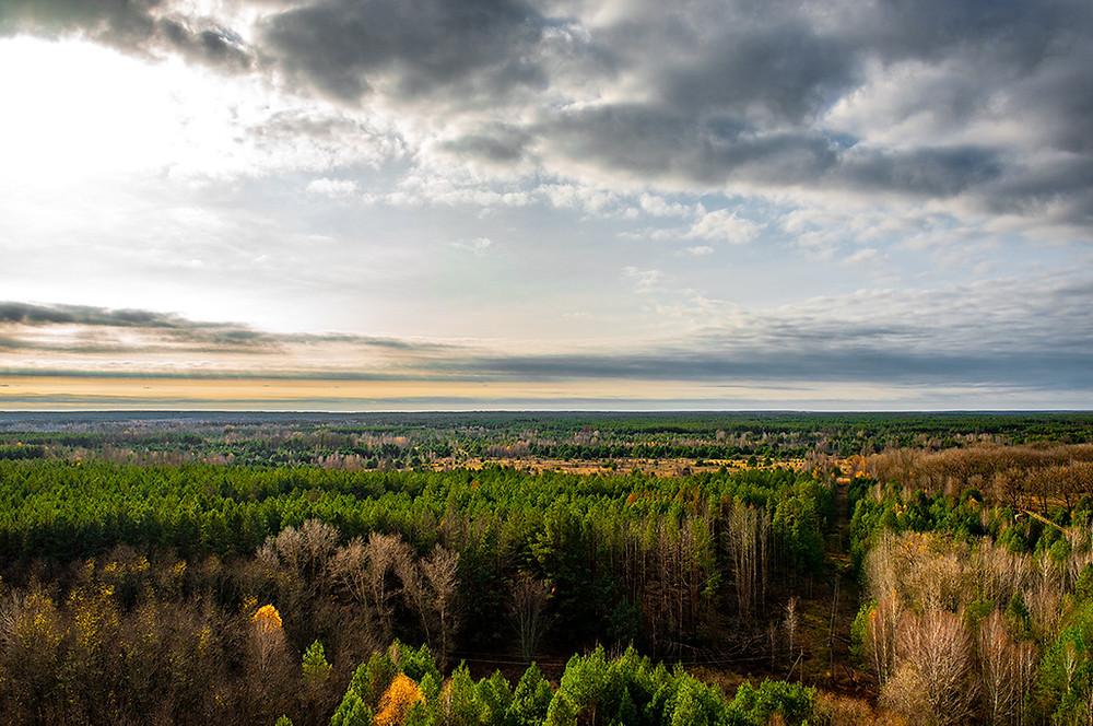 Pripyat Pripyat Forest