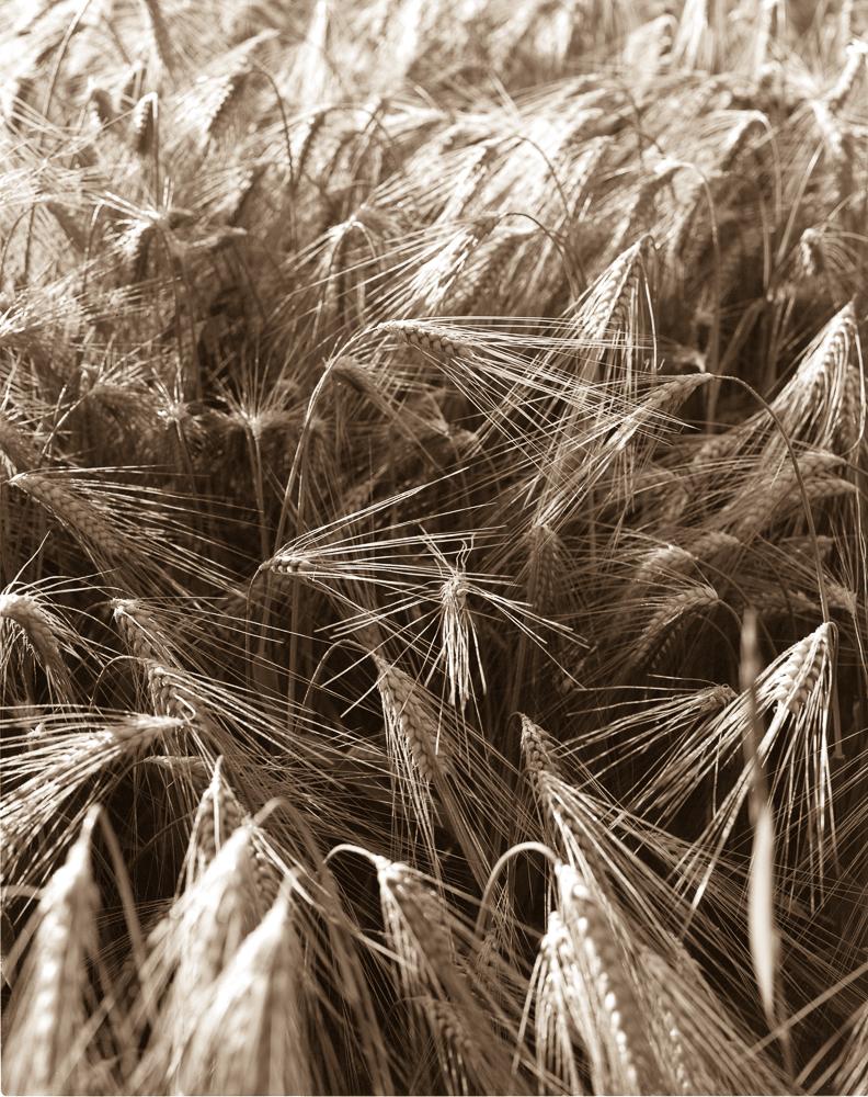 wheat4x52019-0003